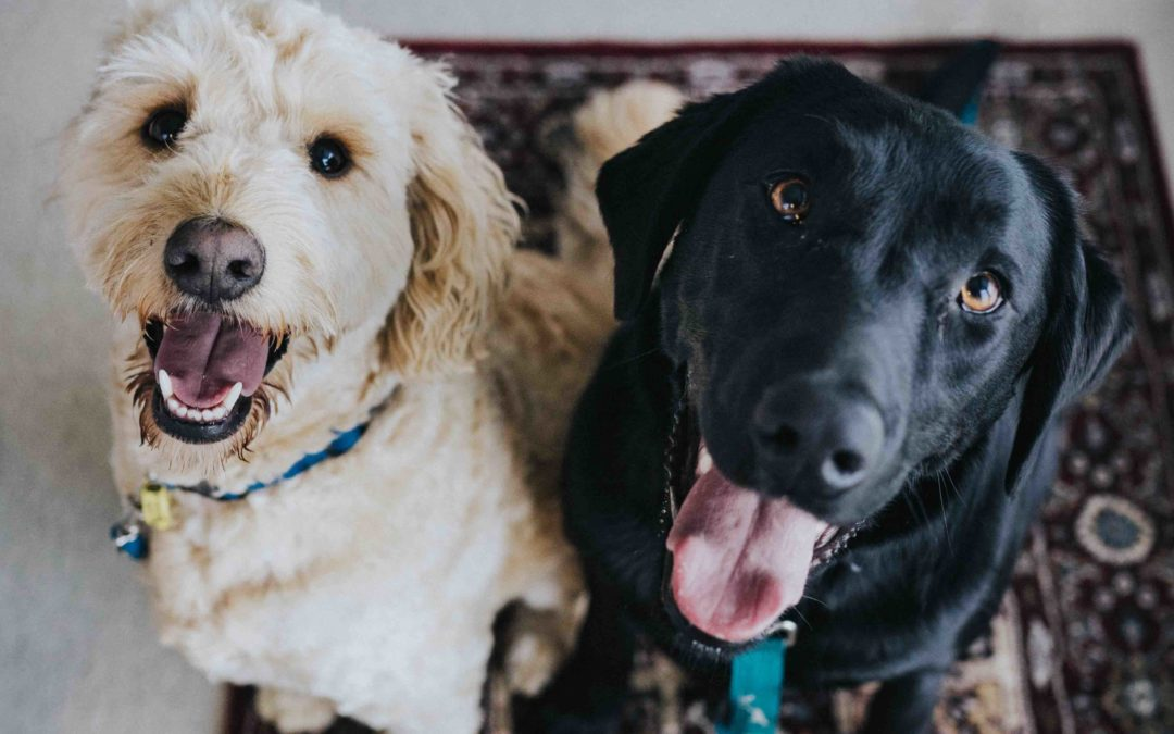 Who You Are: The Parable of the Two Dogs